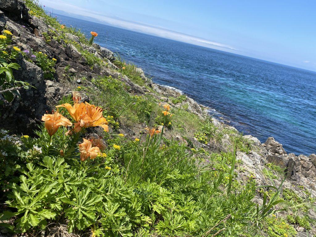 高野崎と花