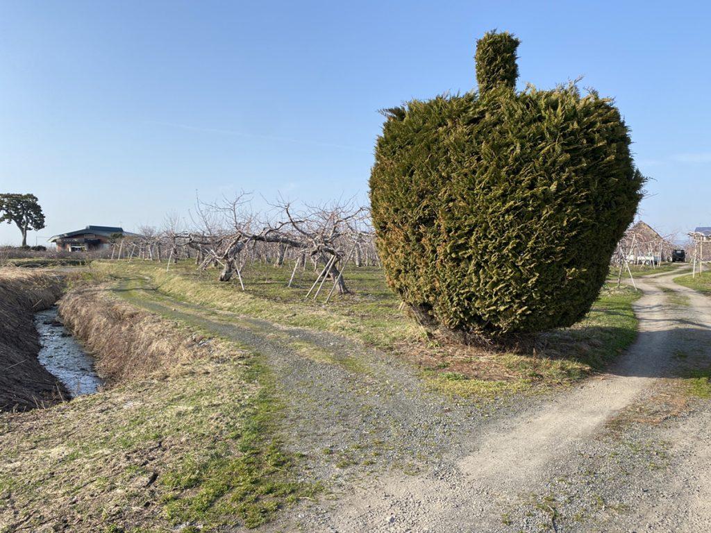 りんご型の木